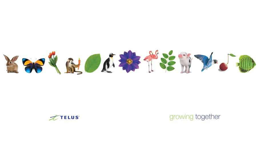 TELUS growing together