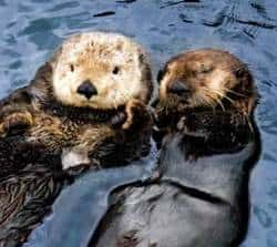 Vancouver Aquarium – Celebrate Sea Otters