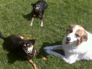 our 3 dogs