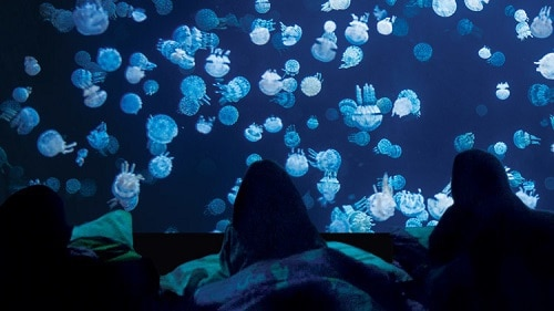 Vancouver Aquarium – Family Sleepovers