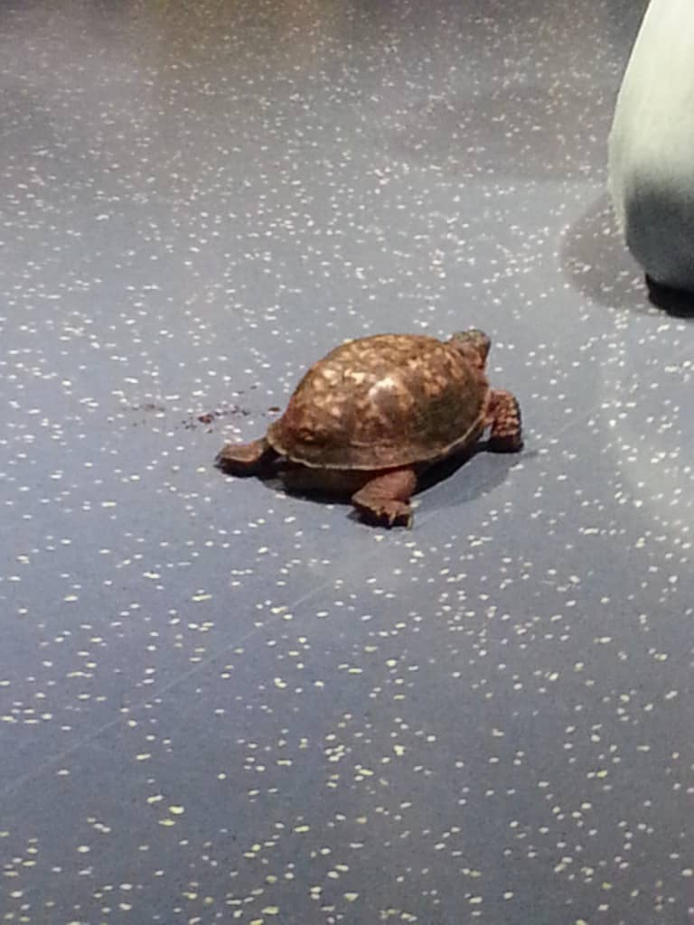 Zoom the Turtle