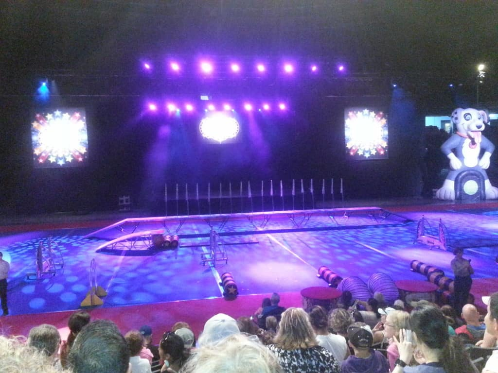 SuperDogs Stage