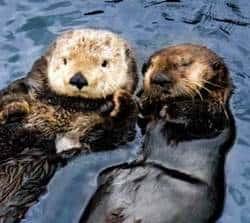 Vancouver Aquarium – Celebrate Sea Otters