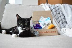 meowbox giveaway