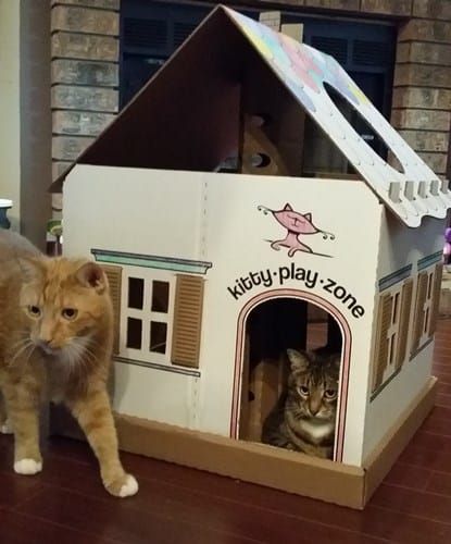Kitty Play Zone 2