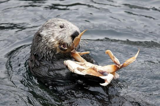 Tanu eats a crab