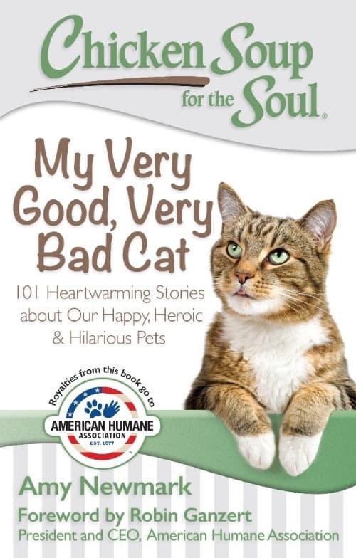 CSS My Very Good Very Bad Cat