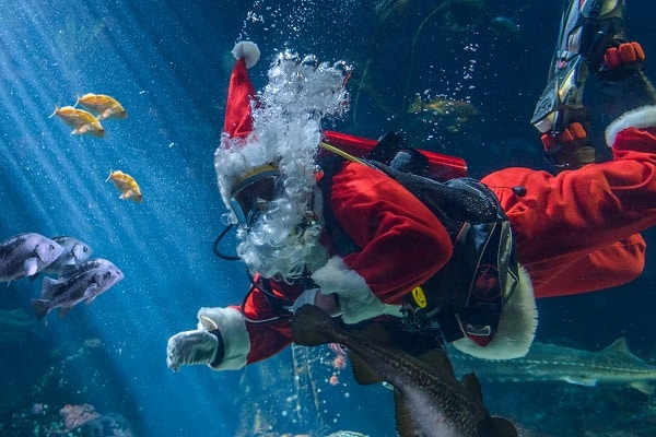 Holiday Traditions Start at the Vancouver Aquarium