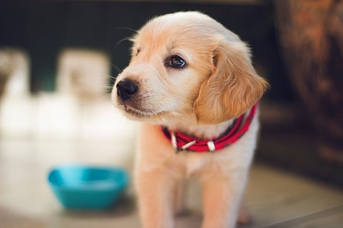 5 Things You Should Buy for a New Pet