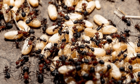 How to Make Your Home Safe from Pests?