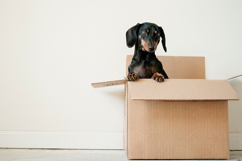 House Moving: Mommy's Quick And Easy Guide